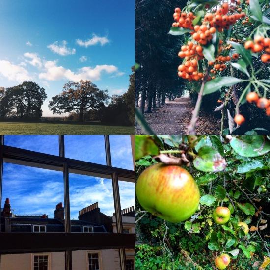 Autumn, Apples, Berries, Shade, Shadow, Blue Skies.