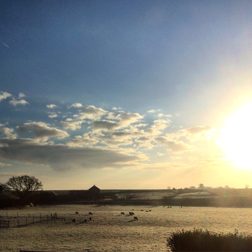 Norfolk Sunrise with sheep